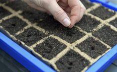 Gemüse-Aussaat: Die richtige Temperatur für die Vorkultur