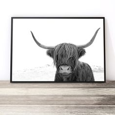 Black and White Highland Cow Print   Highland Cow Art Print   Cow Photography Print   Living Room Ideas   Black and White Prints   Art Prints for Home Online Australia by Little Ink Empire