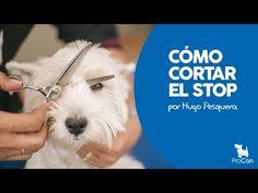 COMO CORTAR EL PELO DEL STOP EN EL PERRO | PELUQUERIA CANINA - YouTube