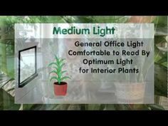 Houseplants #6:  How to figure your light