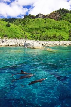 長期休暇は小笠原諸島父島の自然派アクティビティでリフレッシュ ogasawara japan