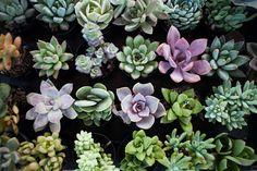 succulent, succulent, succulents!