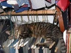 cats sleeping in funny ways | Funny Cat Sleeping / Pictures / Photos / Strangest Places for a Cat ...