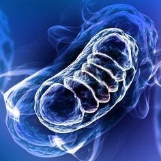 New research shows that during inflammation, macrophages convert mitochondria to toxic compound producers that further amplify inflammation.