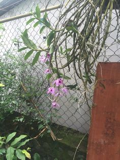 Orquídeas (colgantes)