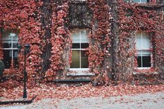 A beautiful free photo of house windows and glass leaves. This image is free for both personal and commercial use. Exterior Doors, Interior And Exterior, Interior Design, Adjustable Height Coffee Table, Fireplace Pictures, James Hardie, Windows Wallpaper, Pink Leaves, Protecting Your Home
