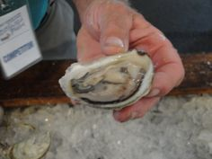 Oyster Shucking & tasting at the #PEI #International #Shellfish #Festival. www.fallflavours.ca