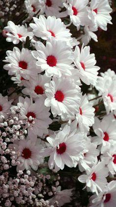 Que lindas, cores e Flores.