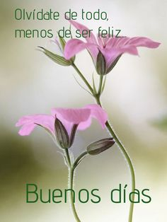 Good Morning Cards, Good Morning Images, Good Day Quotes, Good Morning Quotes, Good Morning In Spanish, Happy Birthday Messages, Good Afternoon, Love Images, Spanish Quotes