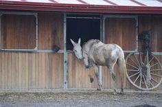 """En la foto Colorín (burro) y Felipe (caballo) contándose sus cosikas de la vida. Cortesía de Amigos del Burro, Coordenadas GPS: N 40º 37'  26""""  -  W 3º  40'  48"""", Madrid (España)."""