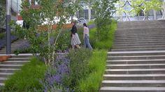 GREEN STAIRCASE (BELVAL) Salvia Nemorosa Mainacht, Sesleria autumnalis, Nepeta racemosa grog