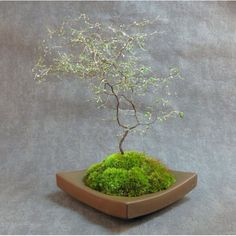 Points To Consider When Bonsai Growing in Azwell, Washington Little Plants, Small Plants, Indoor Plants, Mini Bonsai, Moss Garden, Bonsai Garden, Bonsai Trees, Diy Plante, Arrangements Ikebana