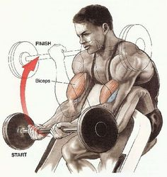 Maybe you think that you know everything about biceps. But do you know that biceps have two parts? How to build the external beam of the biceps? Mens Bicep Workout, Biceps Workout, Gym Workouts, Workout Men, Workout Tips, Full Body Workout Routine, At Home Workout Plan, Workout Routines, Indian Bodybuilder