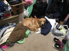 When he misses his mommy he naps in her closet where he can smell her. http://ift.tt/2gzgM6V