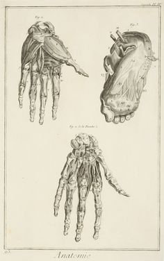 Fine engraved anatomical engraving from Denis Diderots, Encyclopedi. Medical Illustrations, Victor Frankenstein, Penny Dreadful, Architecture Old, Antique Prints, Tudor, Human Body, Antiques, Art