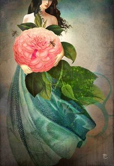 Christian Schloe: The Favorite Flower