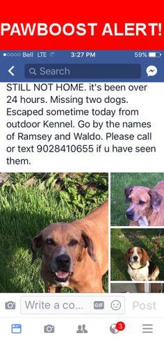 Please spread the word! Ramsey was last seen in Weymouth, NS B0W 3T0.    Nearest Address: NS-101, Weymouth, NS, Canada