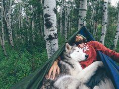 This is the life / Loki the Wolfdog / via UNILAD Adventure / theadventurouslife4us.tumblr.com Say Yes To Adventure