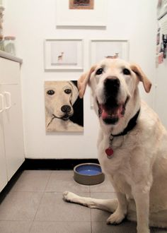 A dog with a great design style :-)