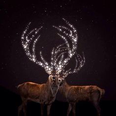 deer with magical antlers :D Deer Art, Moose Art, Photomontage, Illustrations, Illustration Art, Cool Countries, Beautiful Paintings, Beautiful Images, Photo Manipulation