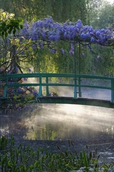 japanese bridge over a misty pond covered with wisteria at Monet's garden. Giverny