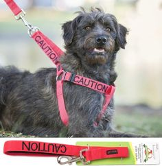 """""""CAUTION"""" Color Coded Red Non-pull Dog Harness & 4 Foot Leash Set (Do Not Approach) PREVENTS Accidents By Warning Others of Your Dog in Advance!:Amazon:Pet Supplies"""