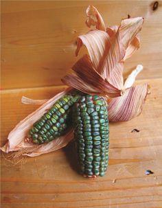 Zapotec Green corn                                                                                                                                                                                 More