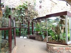 reptile room darmstadt - Google Search