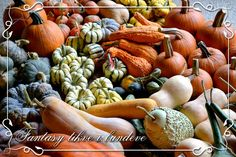 Pumpkins, squashes, gourds...
