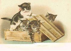 Vintage kitties.