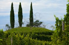 L. Vitale, Vigne Museum [struttura progettata da Yona Friedman e Jean-Baptiste Decavèle]