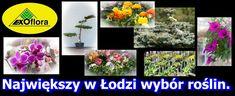 Sklep ogrodniczy Łódź   Galeria Ogrodnicza - Exoflora.pl Exo, Flora, Plants