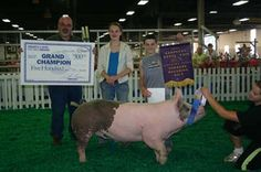 Google Image Result for http://www.kyagr.com/marketing/fair/images/KYProudChampionBreedingGiltAliciaLeebredbyBrianChismBrandenburgKY.jpg