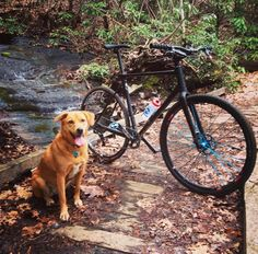 Riding with @mangotdog delivers at least an extra 10 smiles per hour. #aboyandhisdog #traildog # #hound #hounddog #shelterdog #shelterpet #adoptdontshop #dogsofinstagram #828isgreat #brackenmountain #mountains #pisgah #brevardnc #brevard #cycling  #ridelife #liveriderepeat #fromwhereiride #seekandenjoy #happinesswatts #strava #cycling #proveit #ctscoach #ctsathlete @industry_nine #industrynine #i9  @team_greenlife_organicvalley by reidbeloni