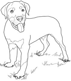 Rottweiler Puppy Coloring page
