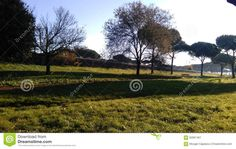 Parco Degli Acquedotti - The long shadows of trees over the grass of Parco degli Acquedotti in Rome, Italy. Photo taken on: November 29th, 2015