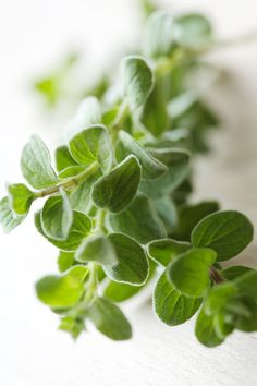 Origan Health And Wellness Coach, Dressing, Spices And Herbs, Spice Blends, Food Art, Food Inspiration, Whole Food Recipes, Herbalism, Plant Leaves