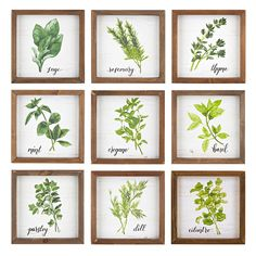 Herb Wall Blocks - Ast 9 - IMAX wall blocks of herbs are perfect for your kitchen decor. Each features a stunning illustration of an herb with its corresponding name in beautiful calligraphy, framed with china fir wood. This set can be the f Framed Art Sets, Wall Art Sets, Wall Art Decor, Herb Art, Picture Frame Sets, Brown Walls, At Home Store, Wall Plaques, Decoration