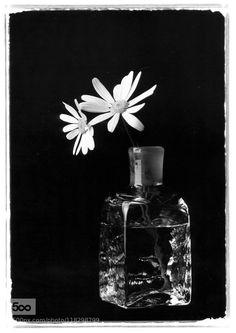 Flowers by kenmori