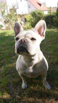 Test Leckerli Hundeblog