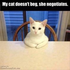 Top 30 Funny animal memes and quotes | And you'd better be willing to make concessions cuz when cats strike...it ain't pretty! Quelque Chose, A Table, Memes, Animals, Home Decor, Comment, Funny Pictures, Everything, Quote