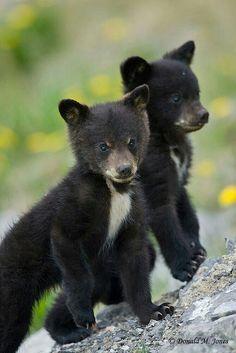 Two Little Cuties!