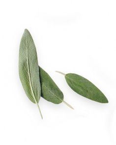 Sage for Your Mind  Health Perk: A study in the journal Pharmacology Biochemistry and Behavior says this herb helps boost memory.  Use It In: Holiday stuffings, soups, and pastas.