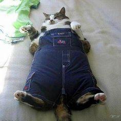 Джинсовый кот желает всем хорошего праздника и просит следить за съеденными калориями. ☺
