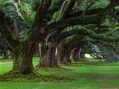 Oak Alley Plantation. Vacherie, Louisiana.