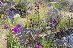 backyard design – Gardening Tips Purple Perennials, Herbaceous Perennials, Hardscape Design, Landscaping Design, Prairie Garden, Border Plants, Gravel Garden, Flower Garden Design, Garden Pictures