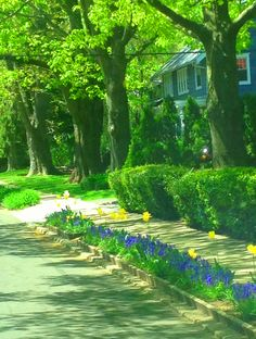 Curbside garden in Highland Park,NJ