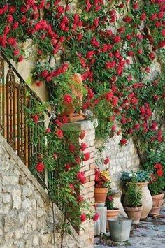 23 Best Red Climbing Roses Images Red Climbing Roses