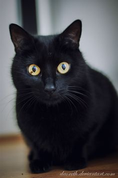 Black by Daoreth on DeviantArt Groucho Marx, Kittens Cutest, Cats And Kittens, Gatos Cats, Cat Boarding, Beautiful Cats, Cat Memes, Crazy Cats, Cool Cats
