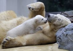 Mommy and baby polarbear :)